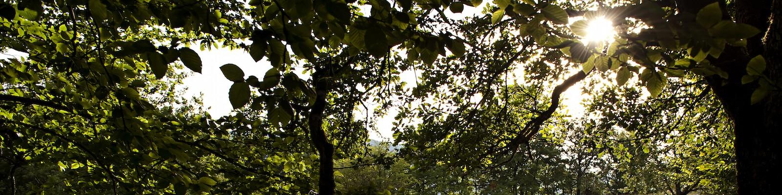 https://eeudf.org/environnement/wp-content/uploads/sites/16/2015/06/©Vali_Faucheux_2014_juillet_campété_Hostias_éclaireur_11-1600x400.jpg