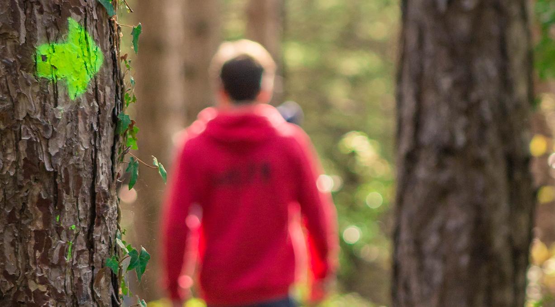 Photo : responsable marchant dans la forêt, de dos